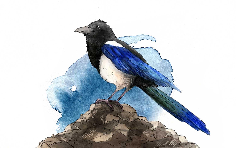 vogel kinderbuchillustration aquarell wasserfarbe elster